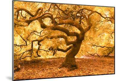 Japanese Maple 2-Moises Levy-Mounted Photographic Print