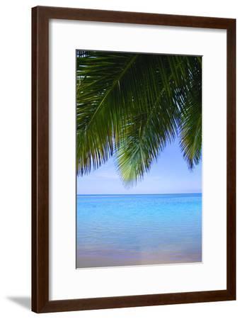 Palm Tree--Framed Photographic Print