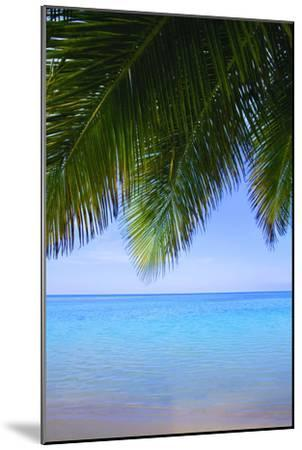 Palm Tree--Mounted Photographic Print