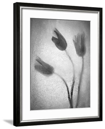 Tulipanes Amarillos-Moises Levy-Framed Photographic Print