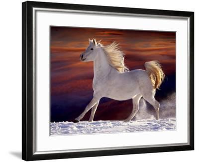 Fantasy Horses 17-Bob Langrish-Framed Photographic Print