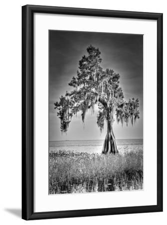 Big Cypress-Dennis Goodman-Framed Photographic Print