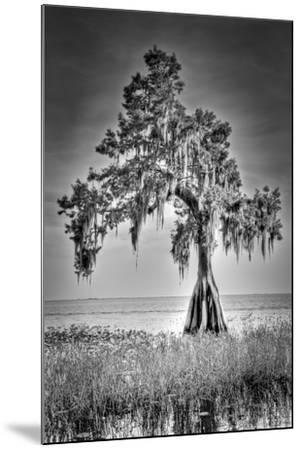 Big Cypress-Dennis Goodman-Mounted Photographic Print