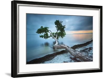 Water Tree 10 Color-Moises Levy-Framed Photographic Print