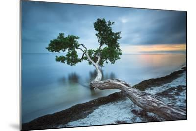 Water Tree 10 Color-Moises Levy-Mounted Photographic Print