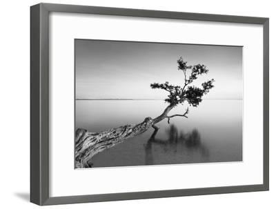 Water Tree IX-Moises Levy-Framed Photographic Print
