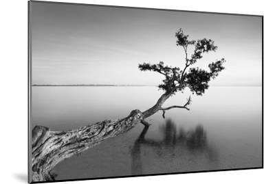 Water Tree IX-Moises Levy-Mounted Photographic Print