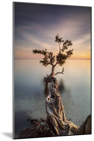 Water Tree III-Moises Levy-Mounted Photographic Print