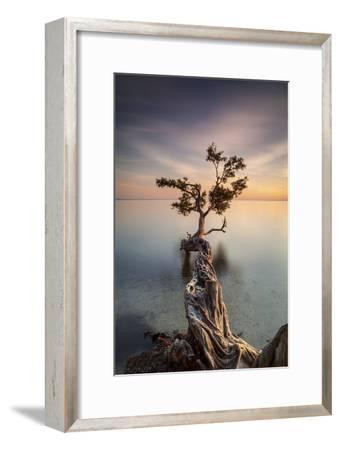 Water Tree III-Moises Levy-Framed Photographic Print