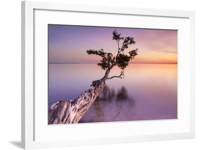 Water Tree XI-Moises Levy-Framed Photographic Print
