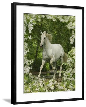 Fantasy Horses 23-Bob Langrish-Framed Photographic Print
