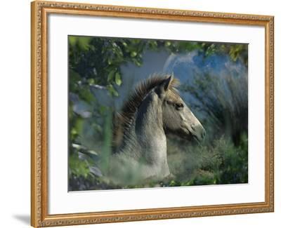 Fantasy Horses 30-Bob Langrish-Framed Photographic Print