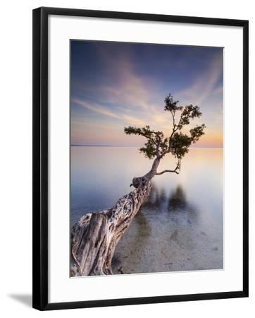 Water Tree X-Moises Levy-Framed Photographic Print