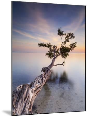 Water Tree X-Moises Levy-Mounted Photographic Print