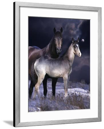 Fantasy Horses 27-Bob Langrish-Framed Photographic Print