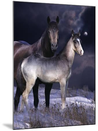 Fantasy Horses 27-Bob Langrish-Mounted Photographic Print