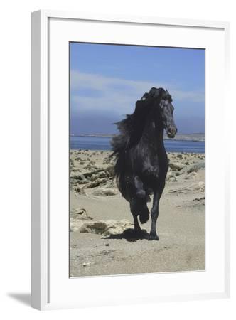 Fantasy Horses 08-Bob Langrish-Framed Photographic Print