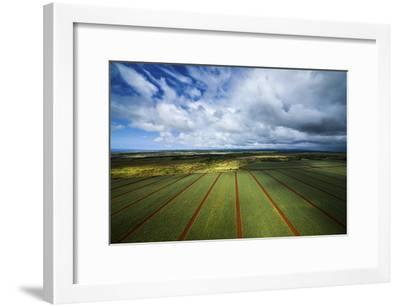 Pineapple Fields-Cameron Brooks-Framed Photographic Print