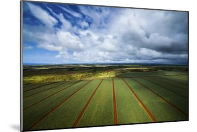 Pineapple Fields-Cameron Brooks-Mounted Photographic Print