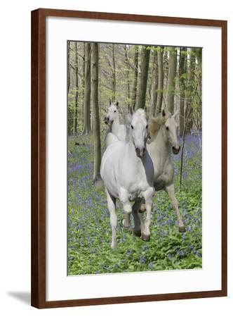 Fantasy Horses 06-Bob Langrish-Framed Photographic Print