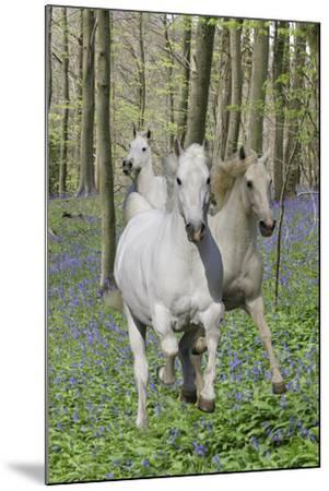 Fantasy Horses 06-Bob Langrish-Mounted Photographic Print