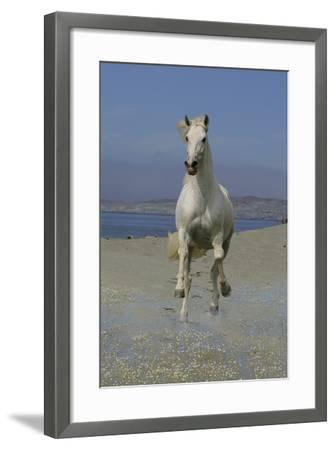 Fantasy Horses 02-Bob Langrish-Framed Photographic Print