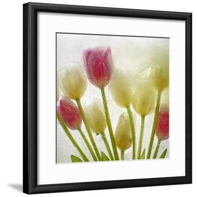 Flores Congeladas-Moises Levy-Framed Photographic Print