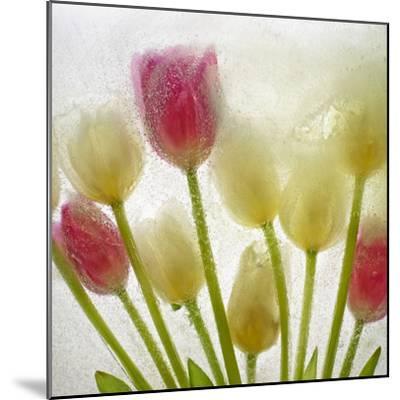 Flores Congeladas-Moises Levy-Mounted Photographic Print