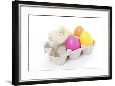 Chicks 008-Andrea Mascitti-Framed Photographic Print