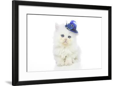 Kittens 005-Andrea Mascitti-Framed Photographic Print