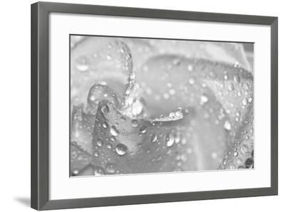 Rose-Gordon Semmens-Framed Photographic Print