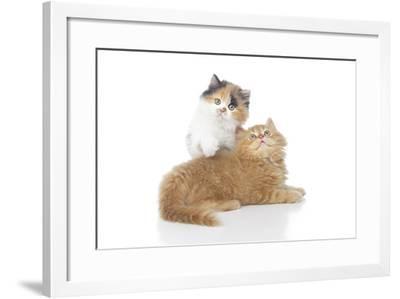 Kittens 002-Andrea Mascitti-Framed Photographic Print