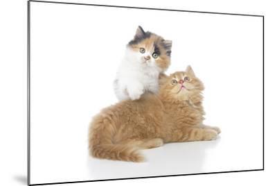 Kittens 002-Andrea Mascitti-Mounted Photographic Print