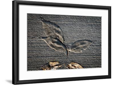 Cement Autumn 1335-Gordon Semmens-Framed Photographic Print