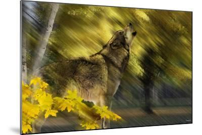 Howling Wolf-Gordon Semmens-Mounted Photographic Print