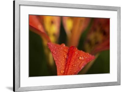 Buffalo River 2090-Gordon Semmens-Framed Photographic Print
