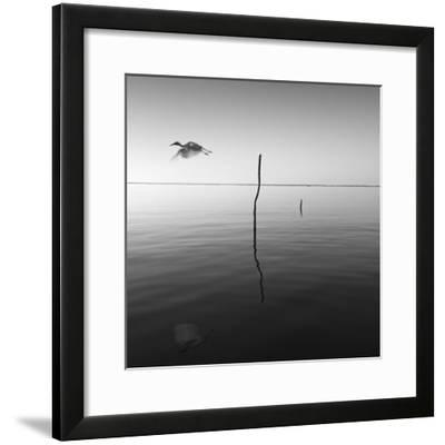 Fly-Moises Levy-Framed Photographic Print