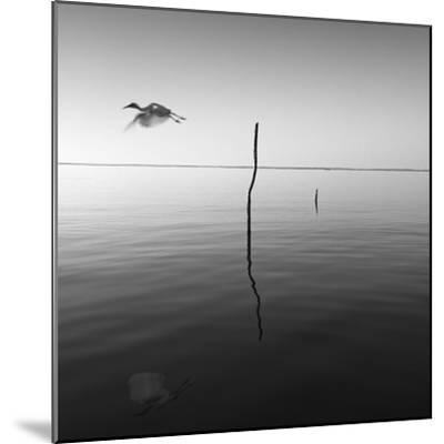 Fly-Moises Levy-Mounted Photographic Print