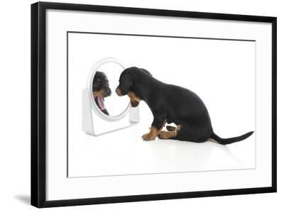 Puppies 006-Andrea Mascitti-Framed Photographic Print