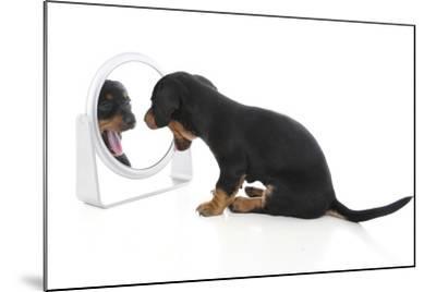 Puppies 006-Andrea Mascitti-Mounted Photographic Print