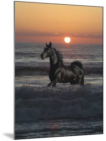 Shadow Walker-Bob Langrish-Mounted Photographic Print