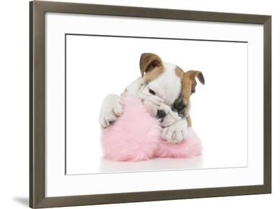 Puppies 057-Andrea Mascitti-Framed Photographic Print