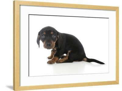 Puppies 072-Andrea Mascitti-Framed Photographic Print