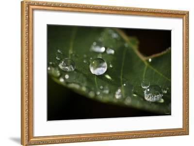 Raindrop on Leaf-Gordon Semmens-Framed Photographic Print