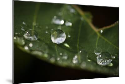 Raindrop on Leaf-Gordon Semmens-Mounted Photographic Print