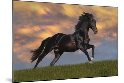 Fantasy Horses 40-Bob Langrish-Mounted Photographic Print