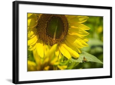 A Work in Progress-Eye Of The Mind Photography-Framed Photographic Print