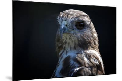 Hawk-Gordon Semmens-Mounted Photographic Print