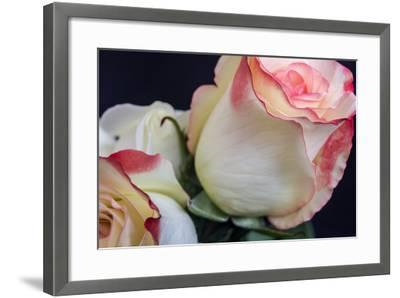 Soft Pink-Bob Rouse-Framed Photographic Print