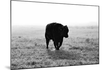 Bull after Ice Storm-Amanda Lee Smith-Mounted Photographic Print